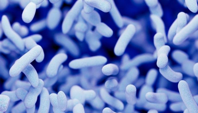 Legionella Bakterisi Analizi